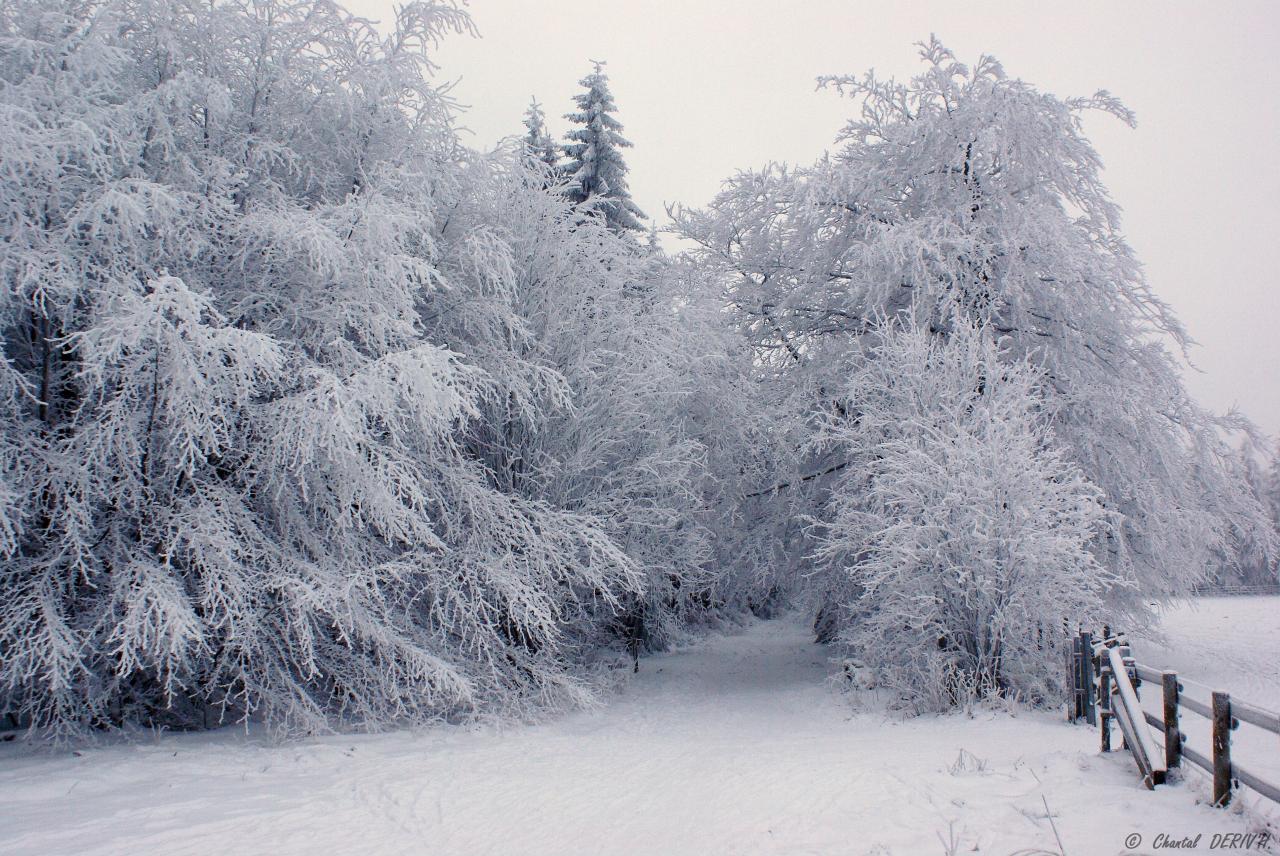 Sous la neige - BARAQUE-MICHEL
