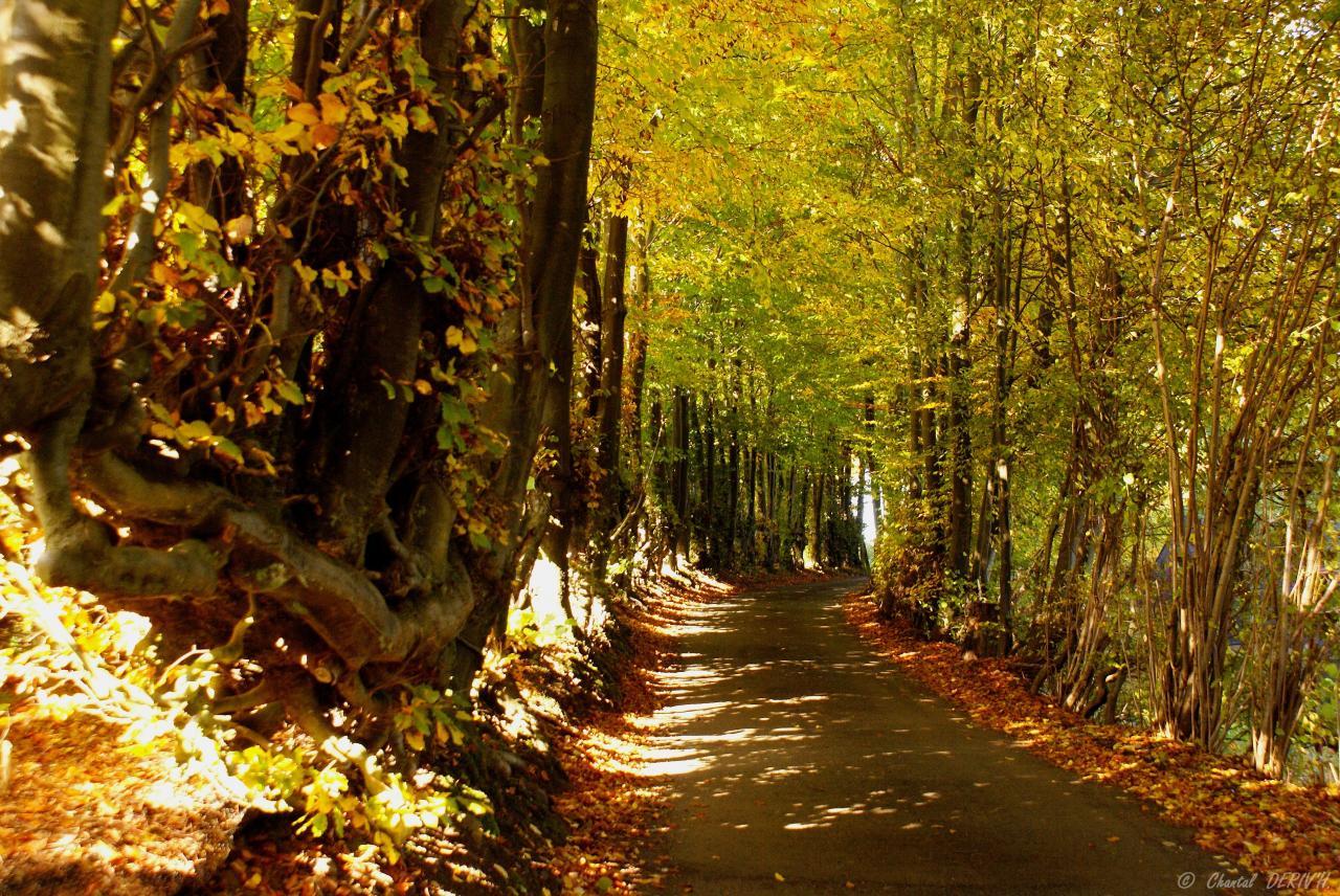 Chemin sur la colline - MALMEDY