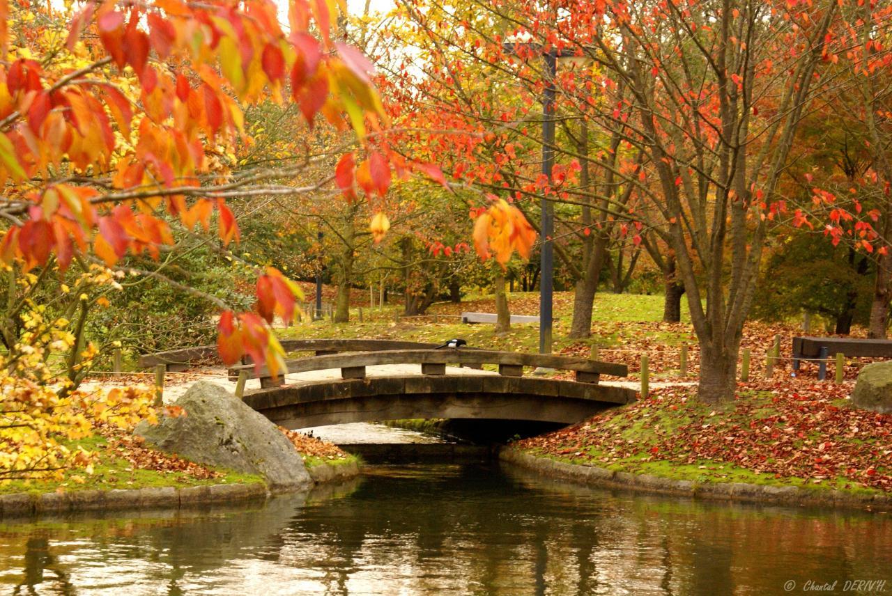 Le jardin Japonais - HASSELT
